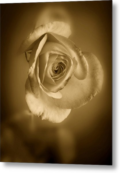 Antique Soft Rose Metal Print