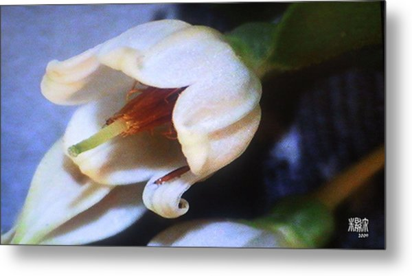 Aphids Metal Print by Michele Caporaso