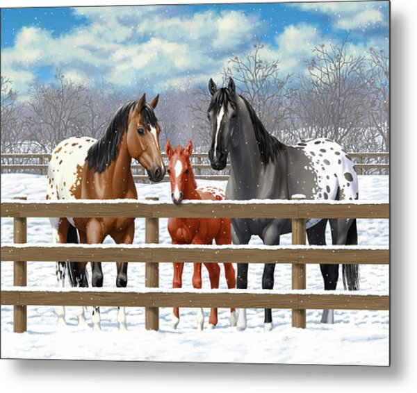 Appaloosa Horses In Winter Ranch Corral Metal Print