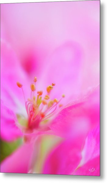 Apple Blossom 1 Metal Print by Leland D Howard