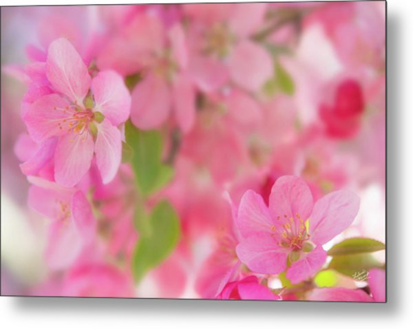 Apple Blossom 4 Metal Print by Leland D Howard