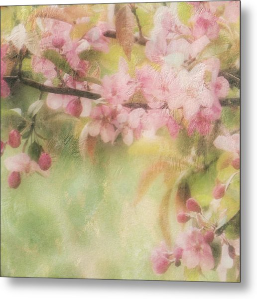 Apple Blossom Frost Metal Print