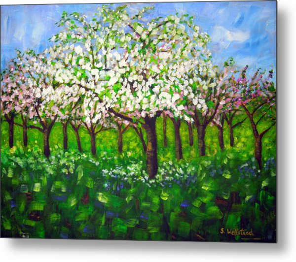 Apple Blossom Orchard Metal Print