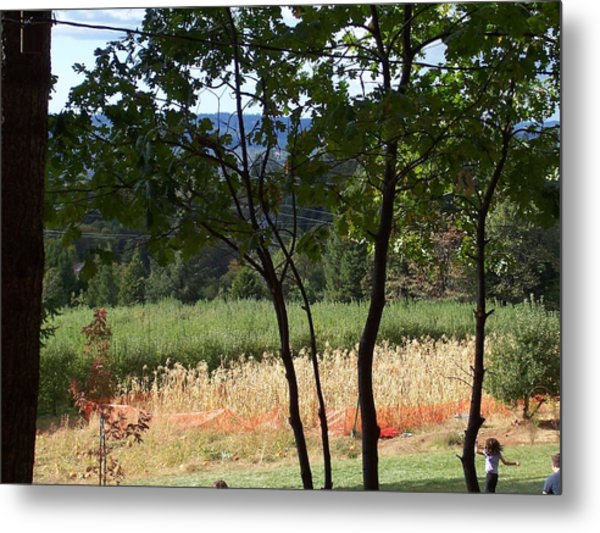 Apple Hill Trees Metal Print by Dawn Marie Black