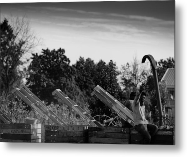 Apple Picking Metal Print