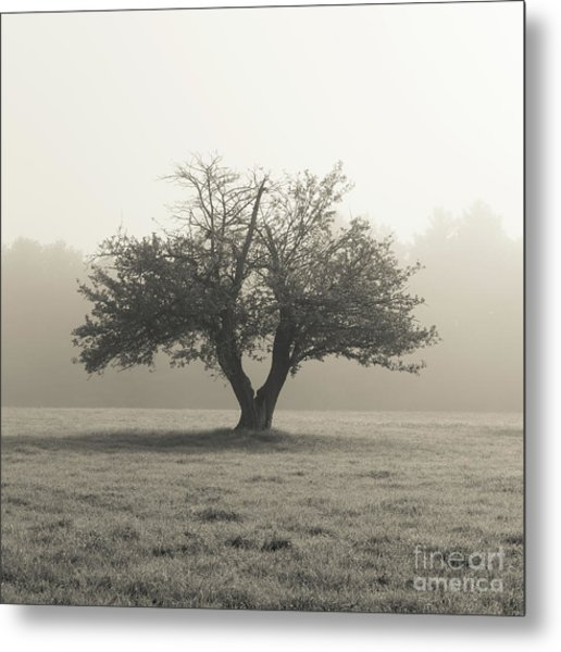 Metal Print featuring the photograph Apple Tree In The Mist by Edward Fielding