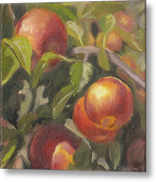 Apples In The Orchard Metal Print by Christopher James