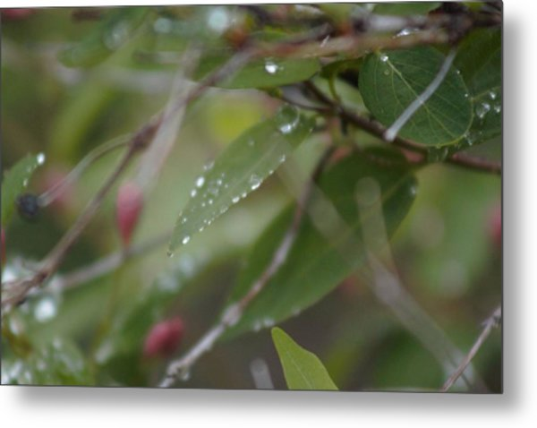 Metal Print featuring the photograph April Showers 1 by Antonio Romero