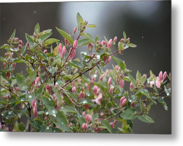 April Showers 10 Metal Print
