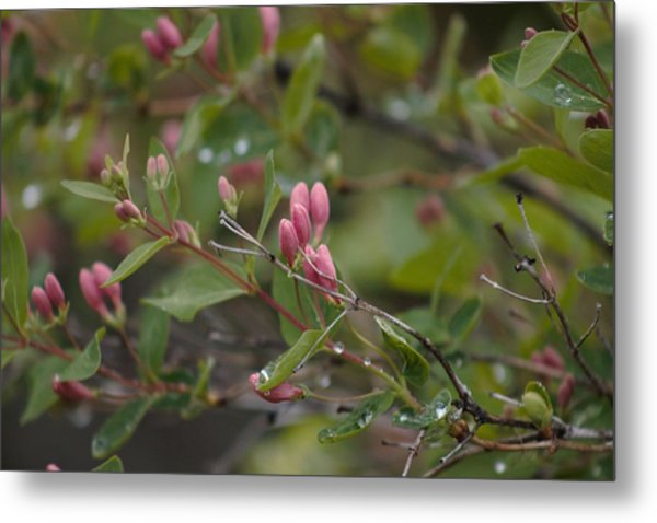 Metal Print featuring the photograph April Showers 2 by Antonio Romero