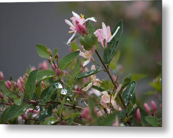 Metal Print featuring the photograph April Showers 7 by Antonio Romero