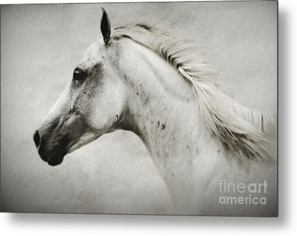 Arabian White Horse Portrait Metal Print