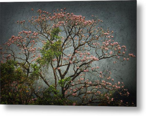 Arandalo Tree Metal Print by Iris Greenwell
