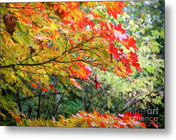 Arboretum Autumn Leaves Metal Print