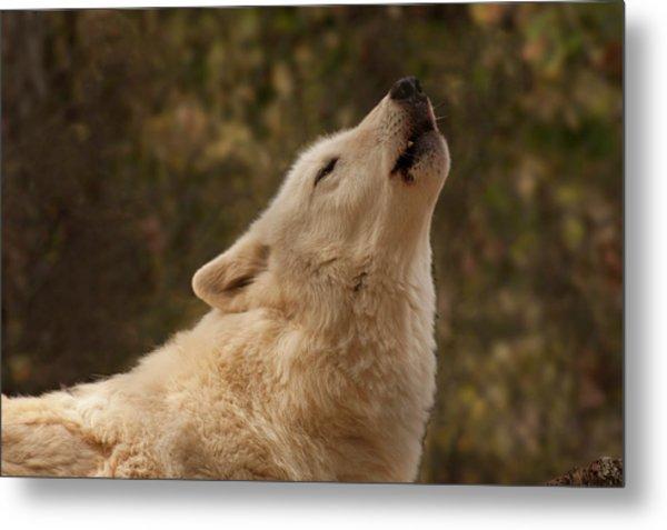 Arctic Wolf Howling Metal Print