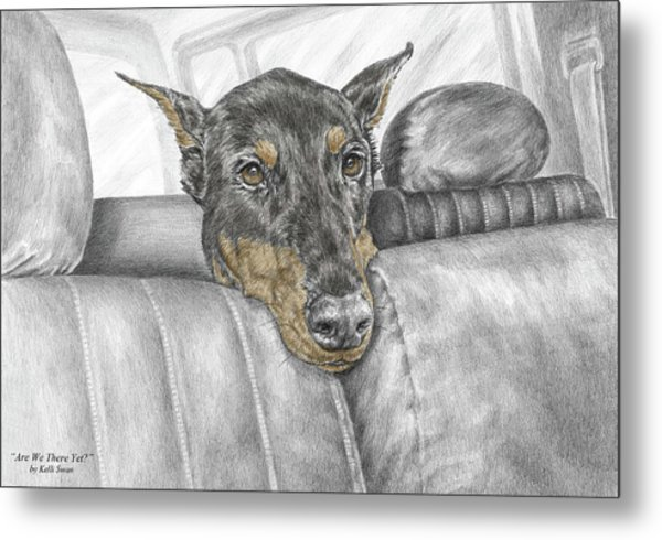 Are We There Yet - Doberman Pinscher Dog Print Color Tinted Metal Print
