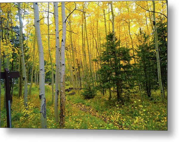 Metal Print featuring the photograph Arizona Fall by Broderick Delaney