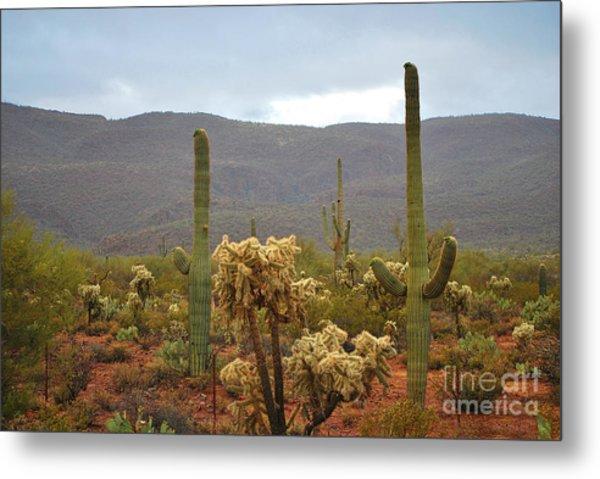 Arizona's Sonoran Desert  Metal Print