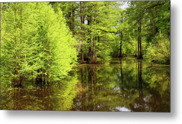 Metal Print featuring the photograph Arkansas Bottomlands by Nicholas Blackwell