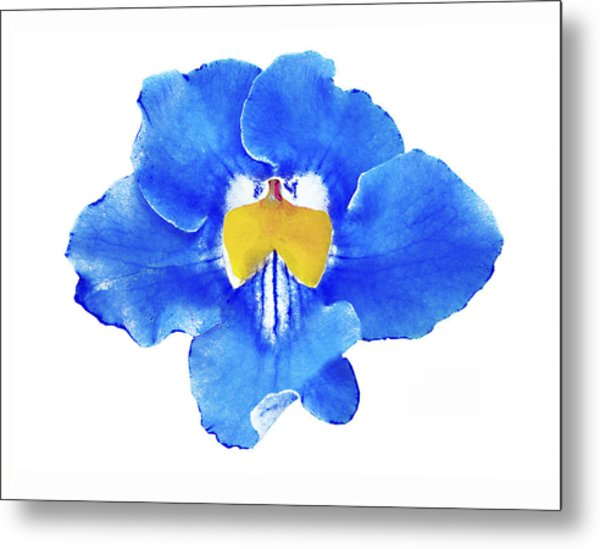 Art Blue Beauty Metal Print