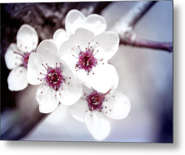 Art Of Spring Metal Print