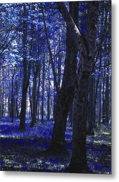 Metal Print featuring the photograph Artistic Tree In Blue by Michelle Audas