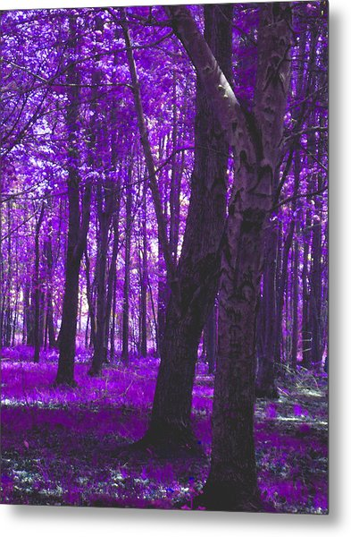 Metal Print featuring the photograph Artistic Tree In Purple by Michelle Audas