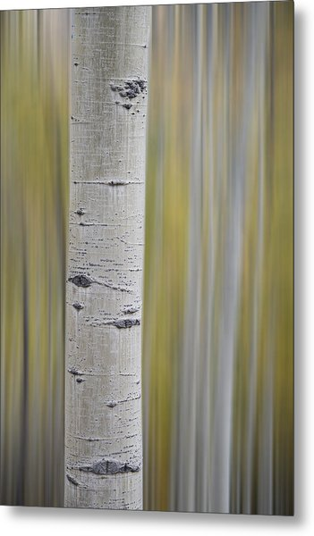 Metal Print featuring the photograph Aspen by Gary Lengyel