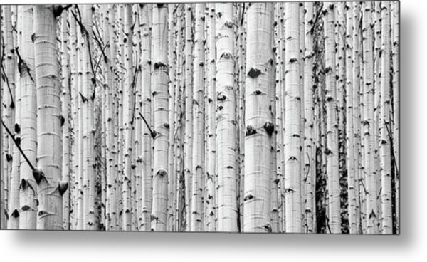Metal Print featuring the photograph Aspen Grove by Stephen Holst