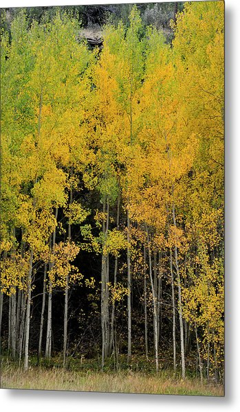 Metal Print featuring the photograph Aspen Haven  by Ron Cline