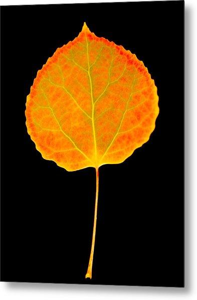 Aspen Leaf Glory Metal Print
