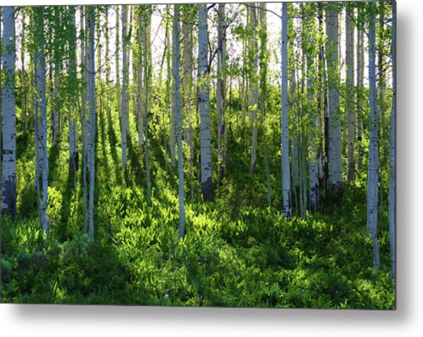 Aspen Morning 1 Metal Print