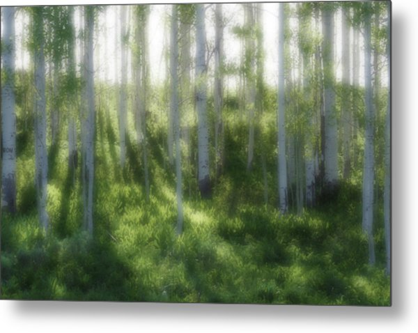 Aspen Morning 2 Metal Print