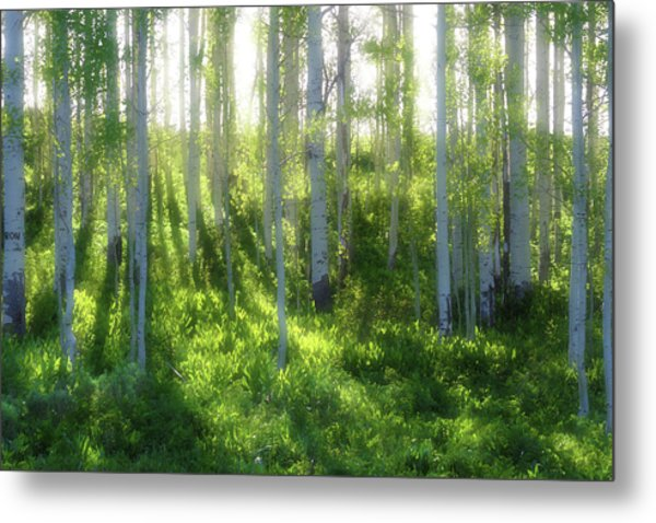 Aspen Morning 3 Metal Print