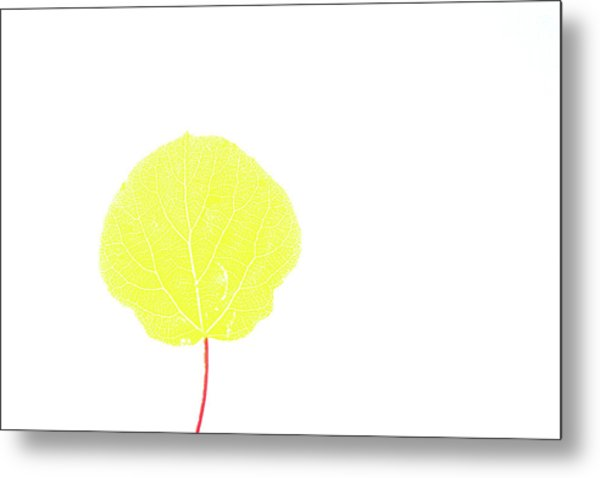 Aspen Yellow Metal Print