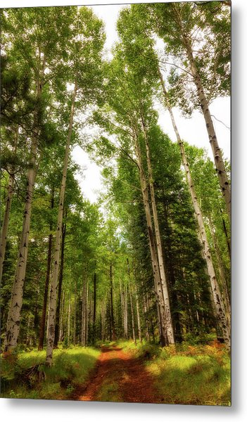 Metal Print featuring the photograph Aspens Galore by Rick Furmanek