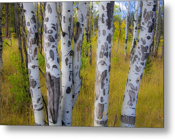 Metal Print featuring the photograph Aspens by Gary Lengyel