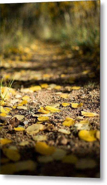 Aspen Leaves On Trail Metal Print