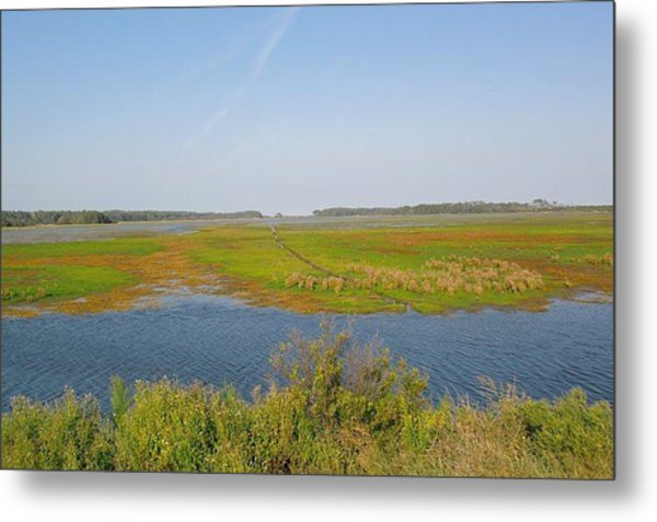Assateague Island Metal Print by Gregory Smith