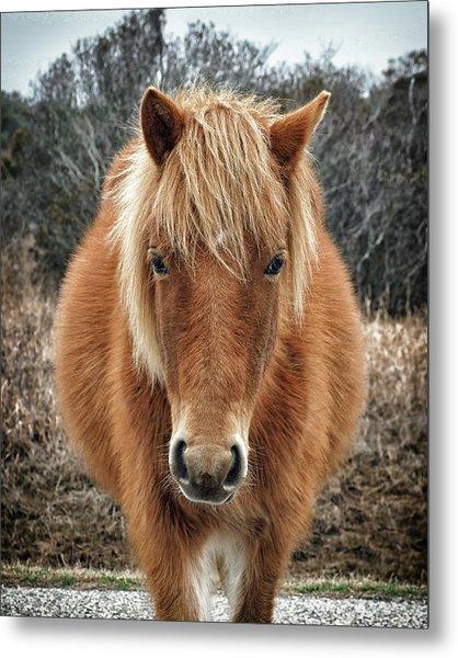 Assateague Island Horse Miekes Noelani Metal Print