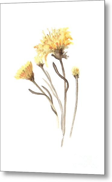 Aster Flower Watercolor Art Print Painting Metal Print