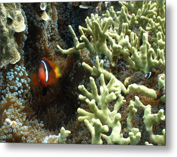 At Home On The Reef Metal Print