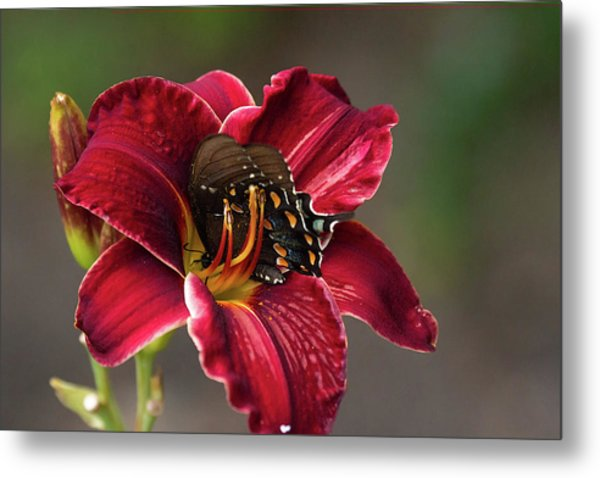 At One With The Orchid Metal Print
