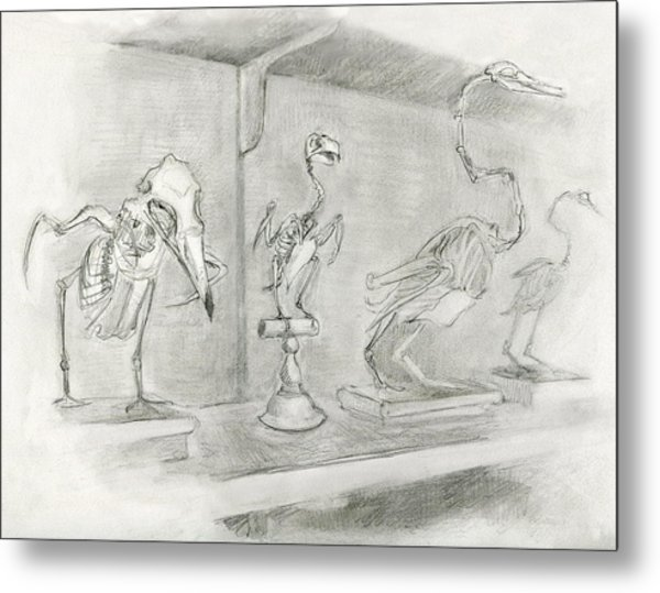 Bird Skeletons Metal Print