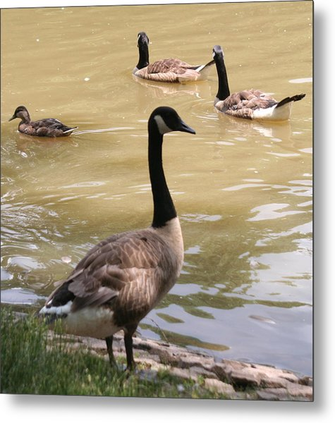 At The Park Metal Print by Gerald Mitchell