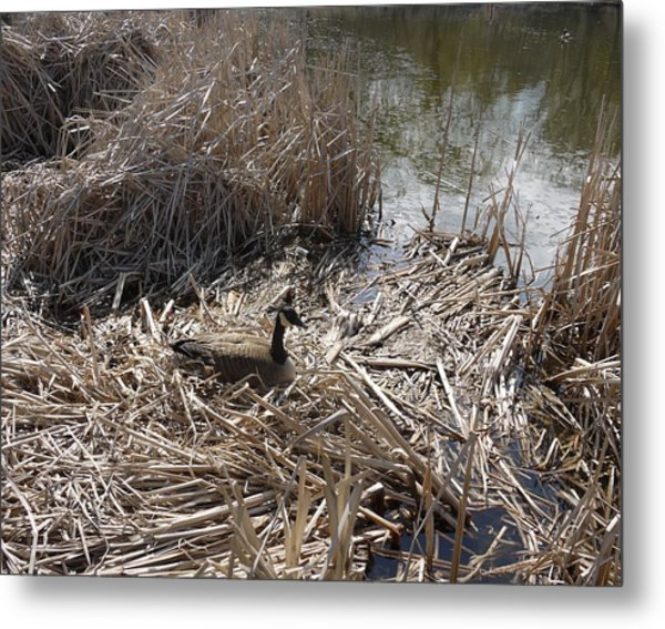 At The Pond Metal Print by Heather Hennick