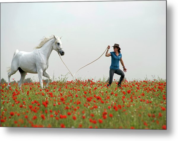 At The Poppies' Field... 2 Metal Print