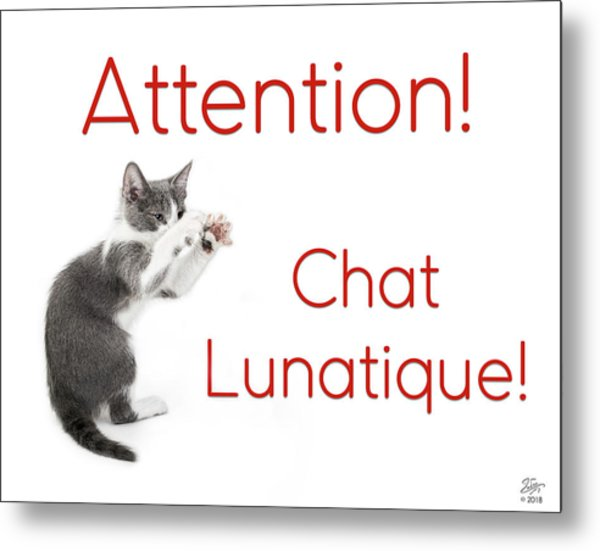 Metal Print featuring the photograph Attention Chat Lunatique by Endre Balogh