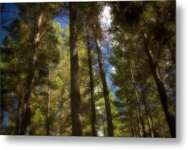 Aupouri Forest Metal Print by Graham Hughes