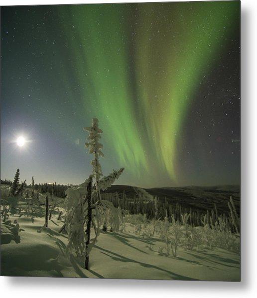 Aurora In The Hoar Frost Metal Print